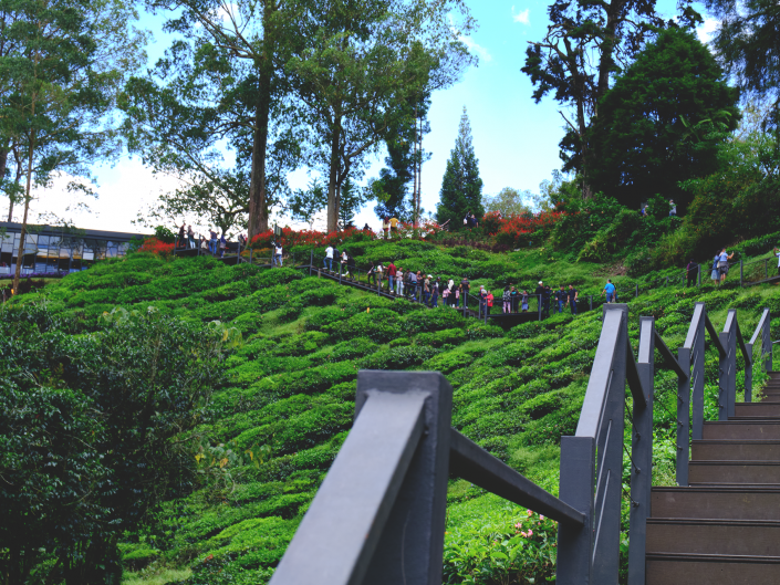 Cameron Highlands Lanscape