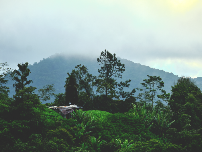 Cameron Highlands Landscape Photography